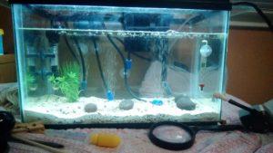5 gallon tank