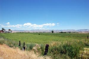 Colorado Pasture