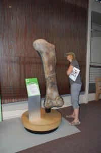 D14 BIG bone