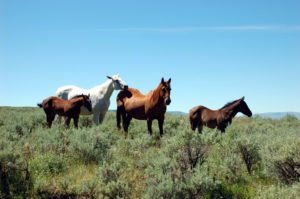 Wild(ish) horses