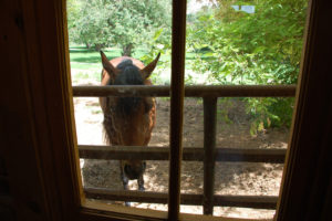 Horse at the Window